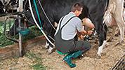 stanchion barn tcm167-82359